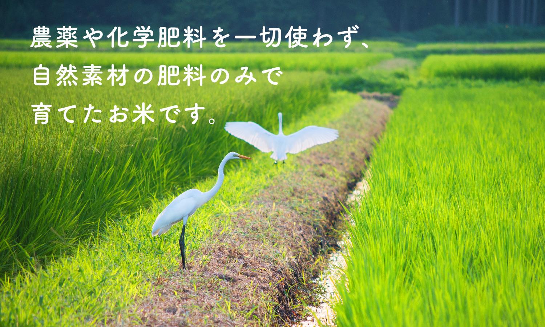 高柳さんのコシヒカリ玄米